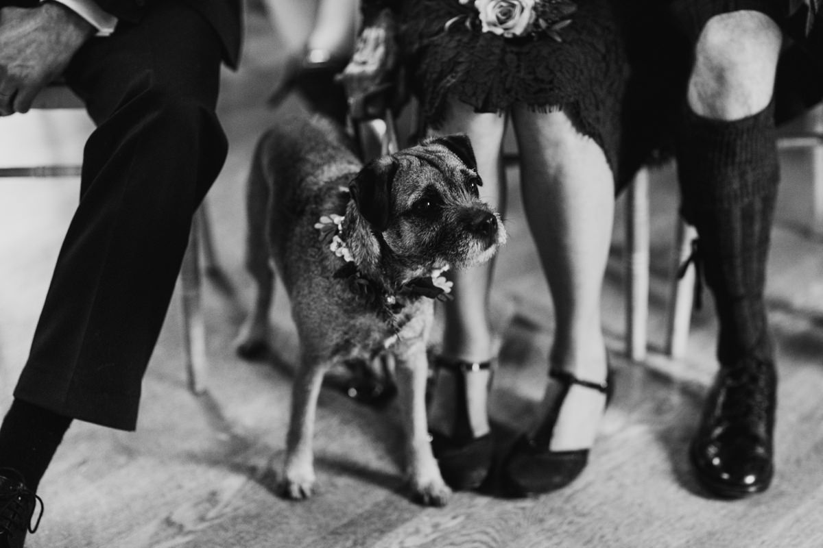 The couple's dog as ring bearer looking over inquisitively