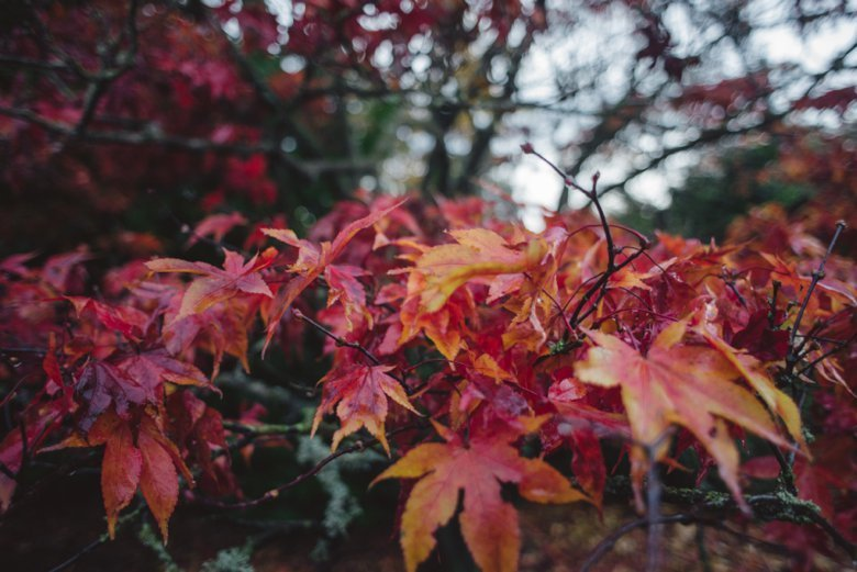 EdinburghBotanicGardensWedding_EmmaandBen_ZoeCampbellPhotography_0071
