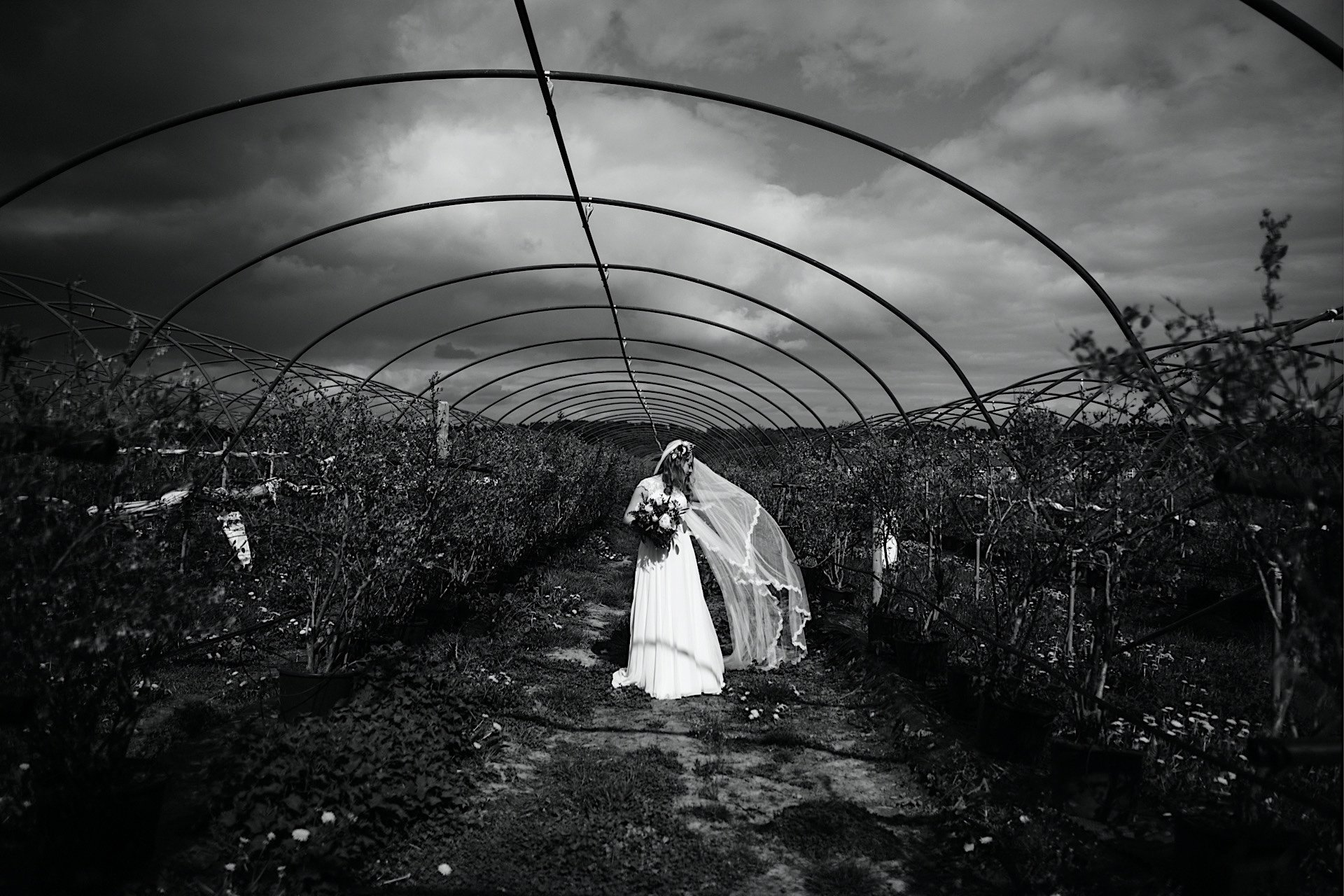 Wind of and under veil black image blowing frame polytunnel brides White