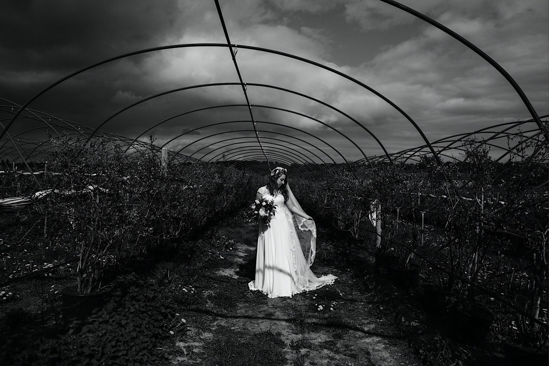 of bride under and black image frame polytunnel White