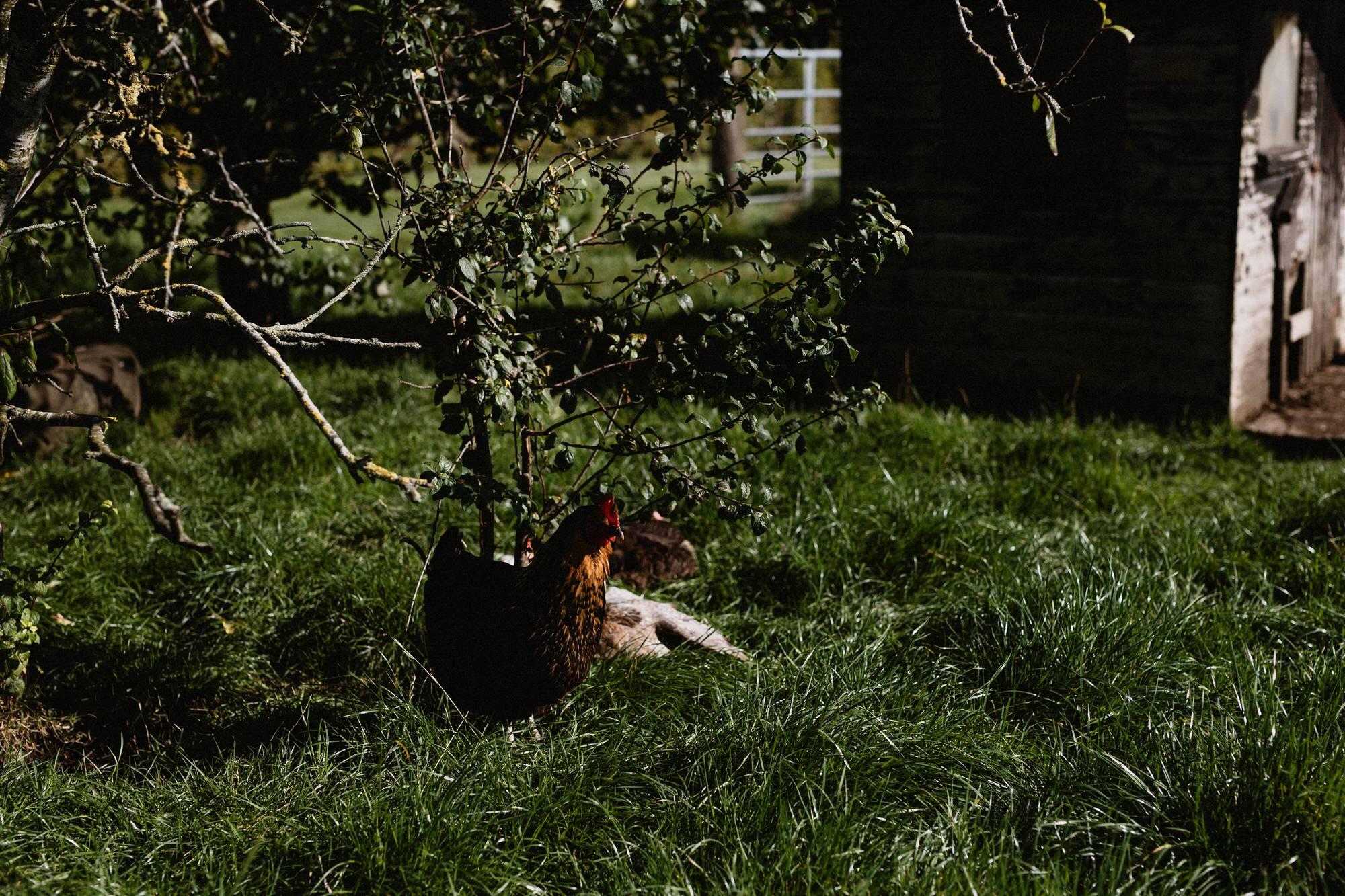 005 TIN SHED KNOCKRAICH WEDDING AUTUMN ZOE ALEXANDRA PHOTOGRAPHY