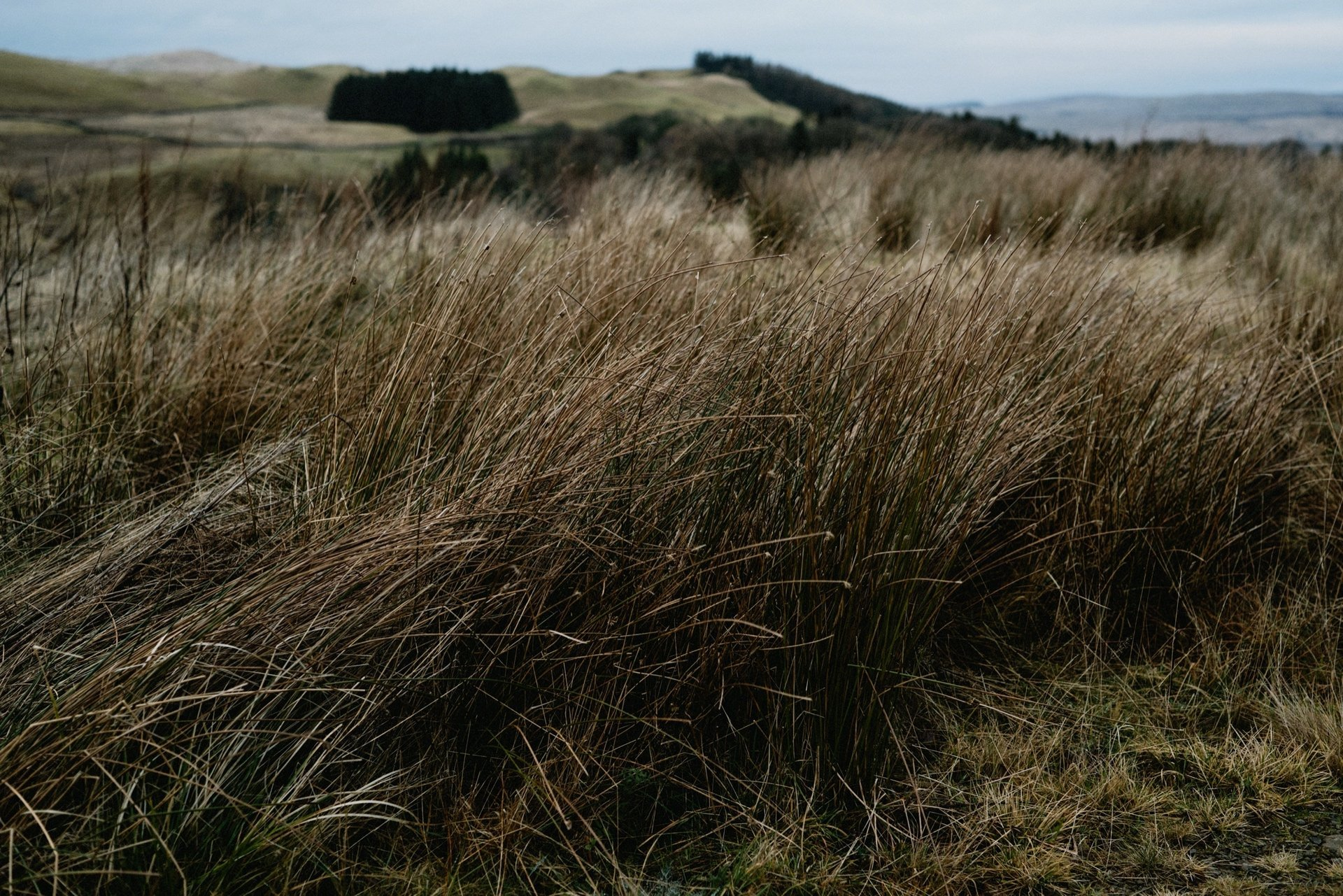 the long grass outside the dark sky observatory
