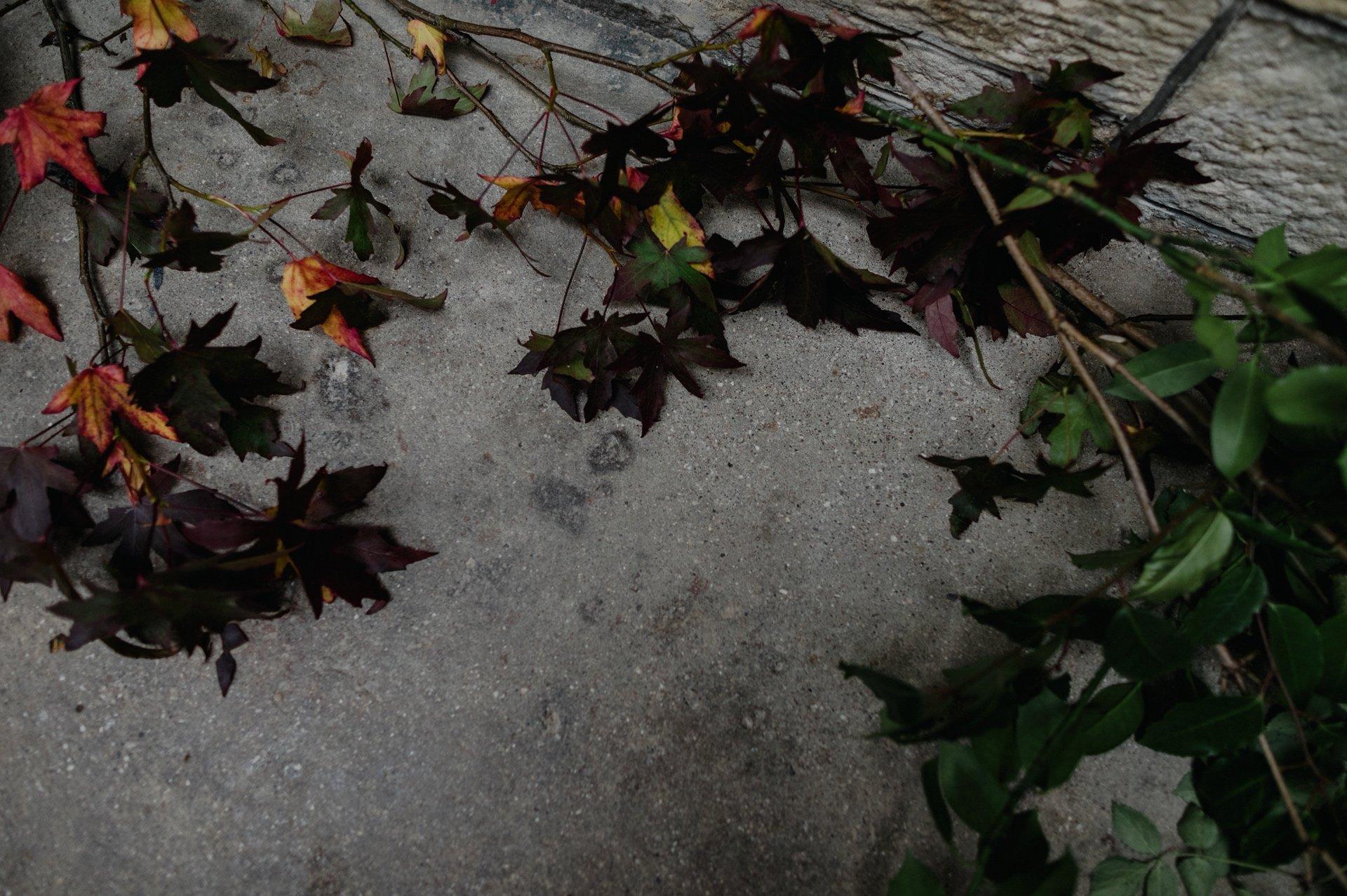 autumn leaves on the concrete floor